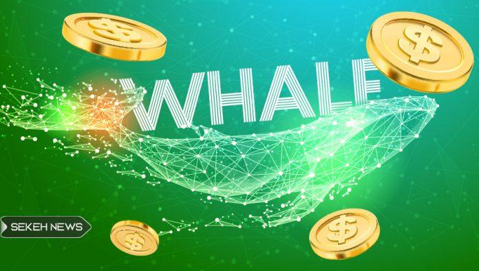 نهنگ های بیت کوین همچنان در حال سو استفاده از بازار